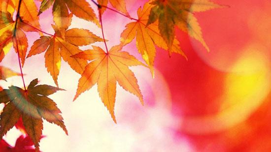 زیباترین اشعار کوتاه درباره پاییز