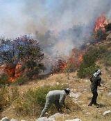 سوختن جنگل های زاگرس در آتش + تصاویر تلخ از سوختن حیوانات