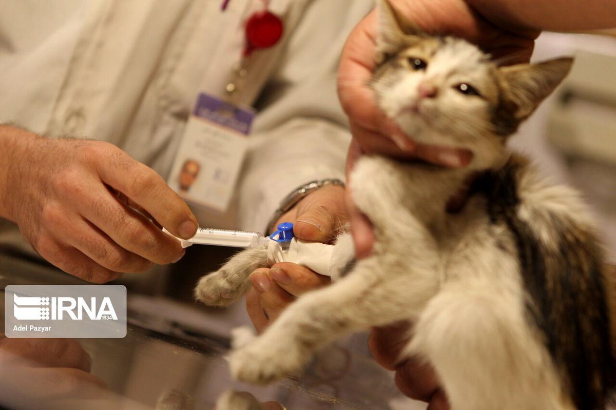 مراقب انتشار ویروس کرونا در حیوانات خانگی باشیم