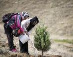 ثبت نام توزیع نهال رایگان به شهروندان در هفته درختکاری با اپلیکیشن شهر من