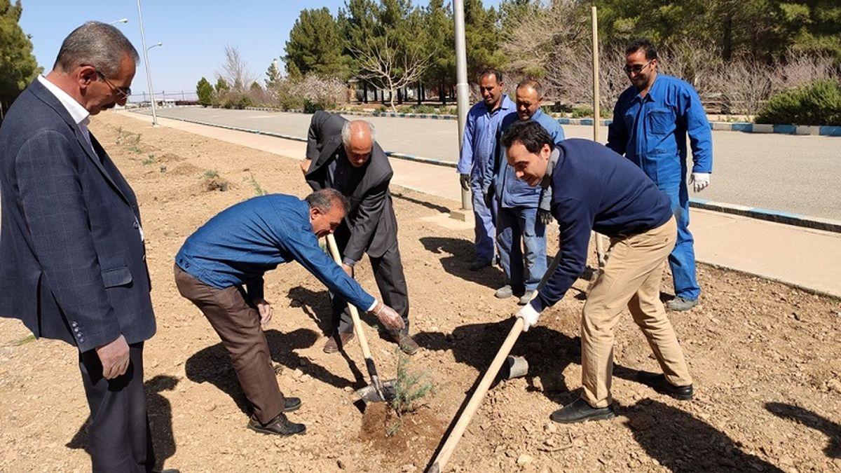 کاشت بیش از 6 هزار و 300 اصله درخت و درختچه در منطقه اصفهان