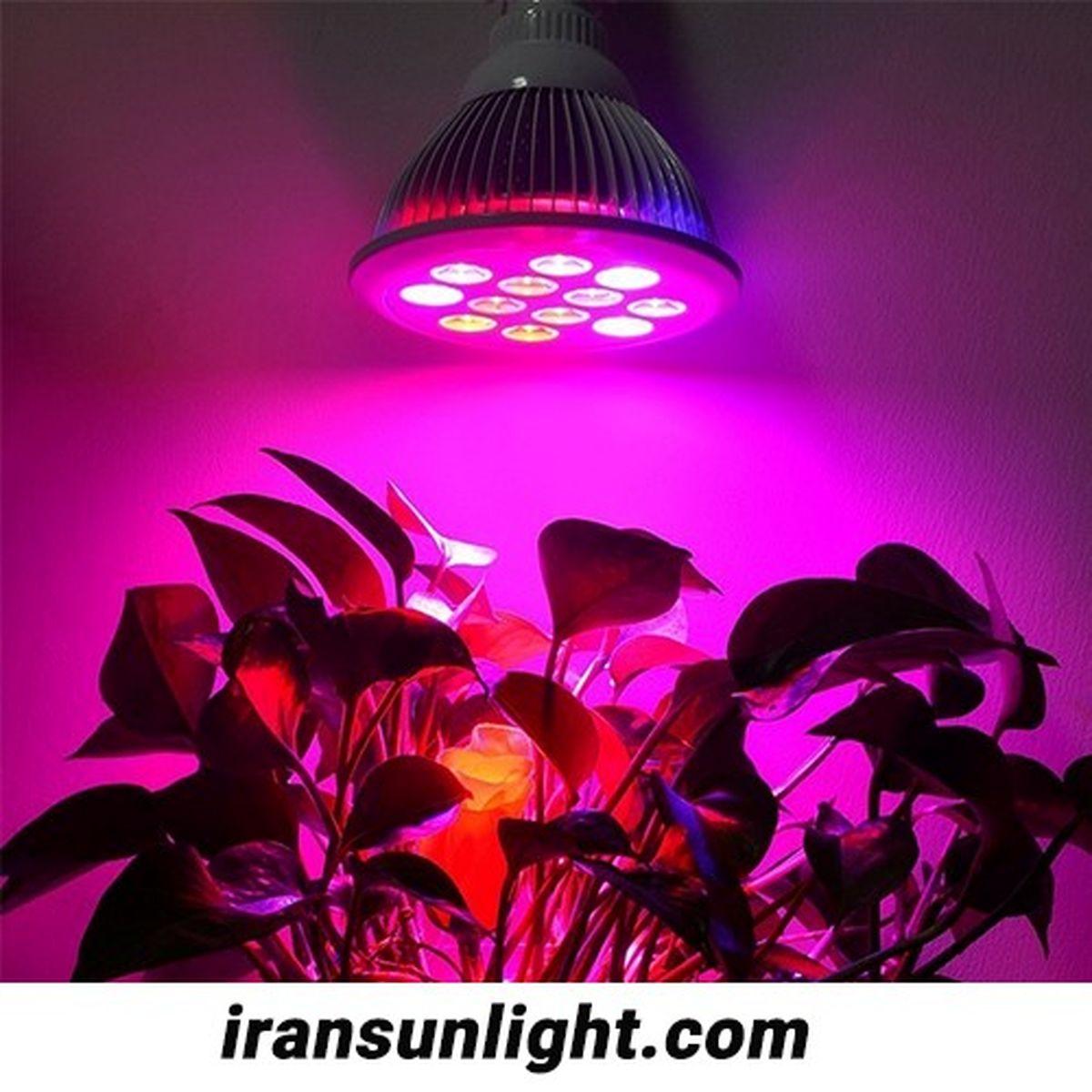 لامپ رشد گیاه چیست و چه کاربردی دارد؟