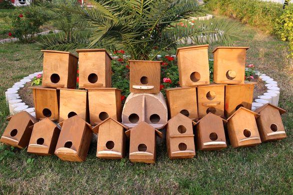 پرنده ها در بیدبلند خلیج فارس می مانند!