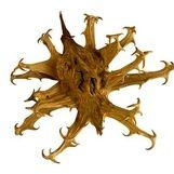 درمان شد آسان بیماری همه گیر با  گیاهی معجزه گر به اسم پنجه شیطان