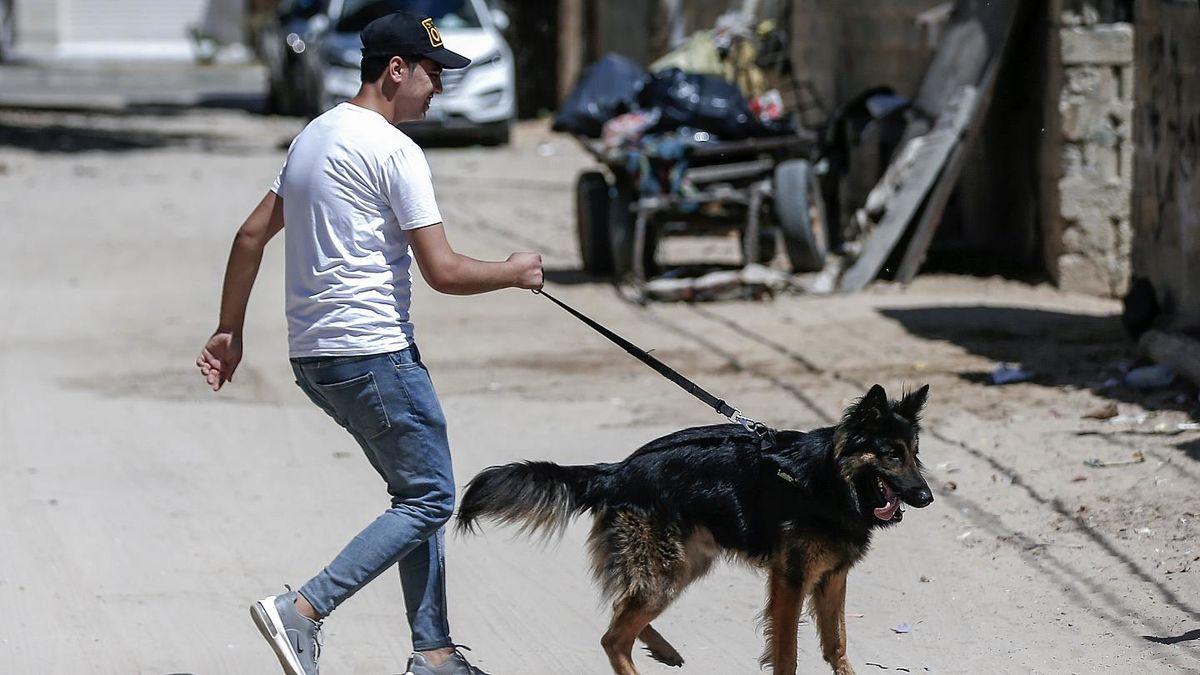 آغاز محدودیت برای صاحبان سگها با توئیت جنجالی