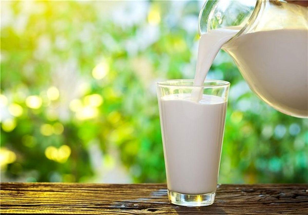 شیر شتر دیابت را کنترل می کند؟+ خواص درمانی