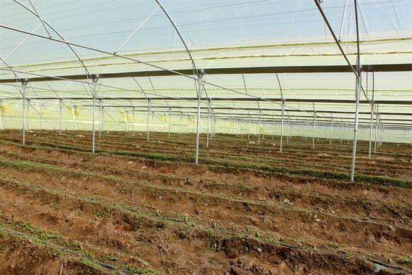 احداث گلخانه 35 هزار مترمربعی با حمایت بانک کشاورزی در کرمان