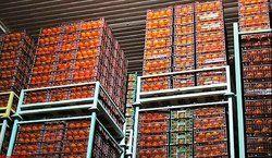 ذخیره ۹ هزار تن میوه برای شب عید در تهران