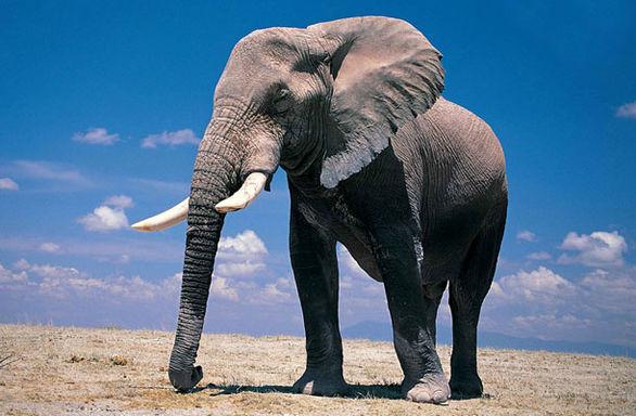 فیلم/ ویدئویی فوق العاده از حس مادرانه یک فیل