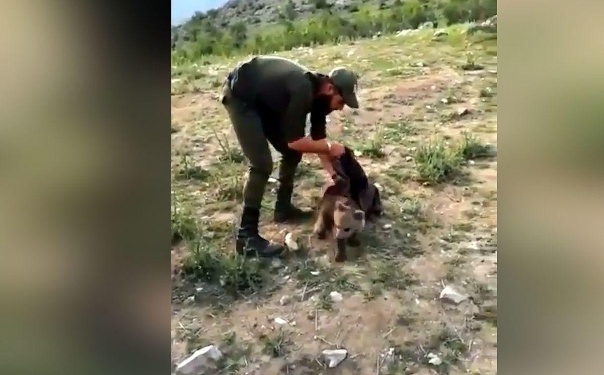 ویدئویی زیبا از رهاکردن توله خرس کوچک در دل طبیعت + ویدئو