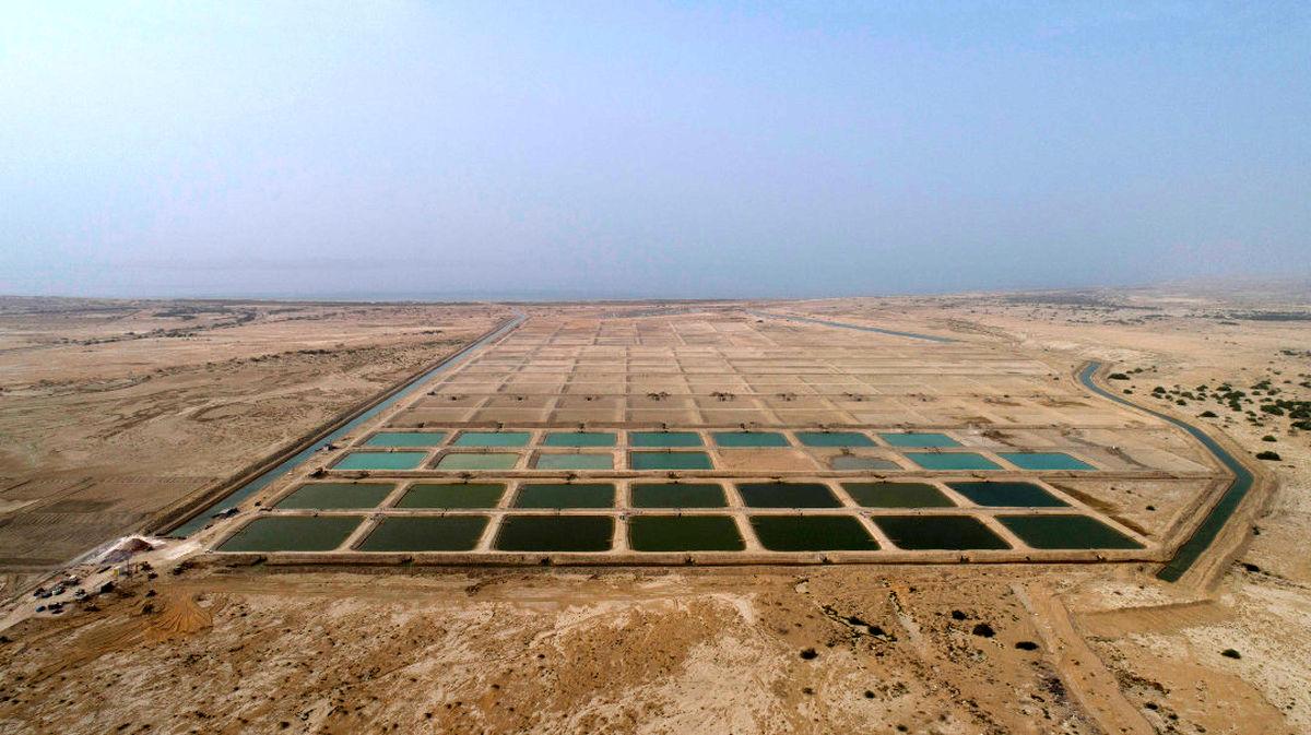 نقش بارز قشم در افزایش تولید آبزیان کشور