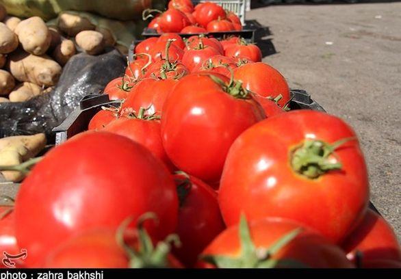 قیمت گوجه تا دو هفته دیگر ۲۵۰۰ تومان میشود