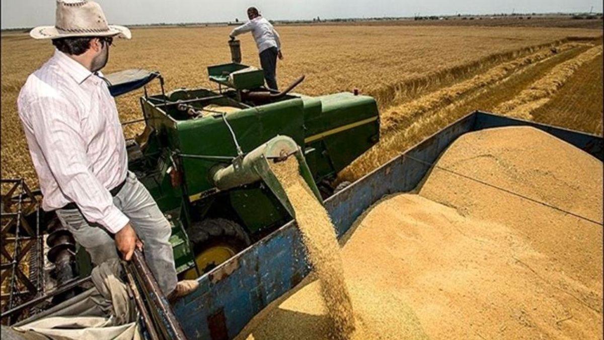 رشد ۴۸ درصدی خرید گندم از کشاورزان فارس