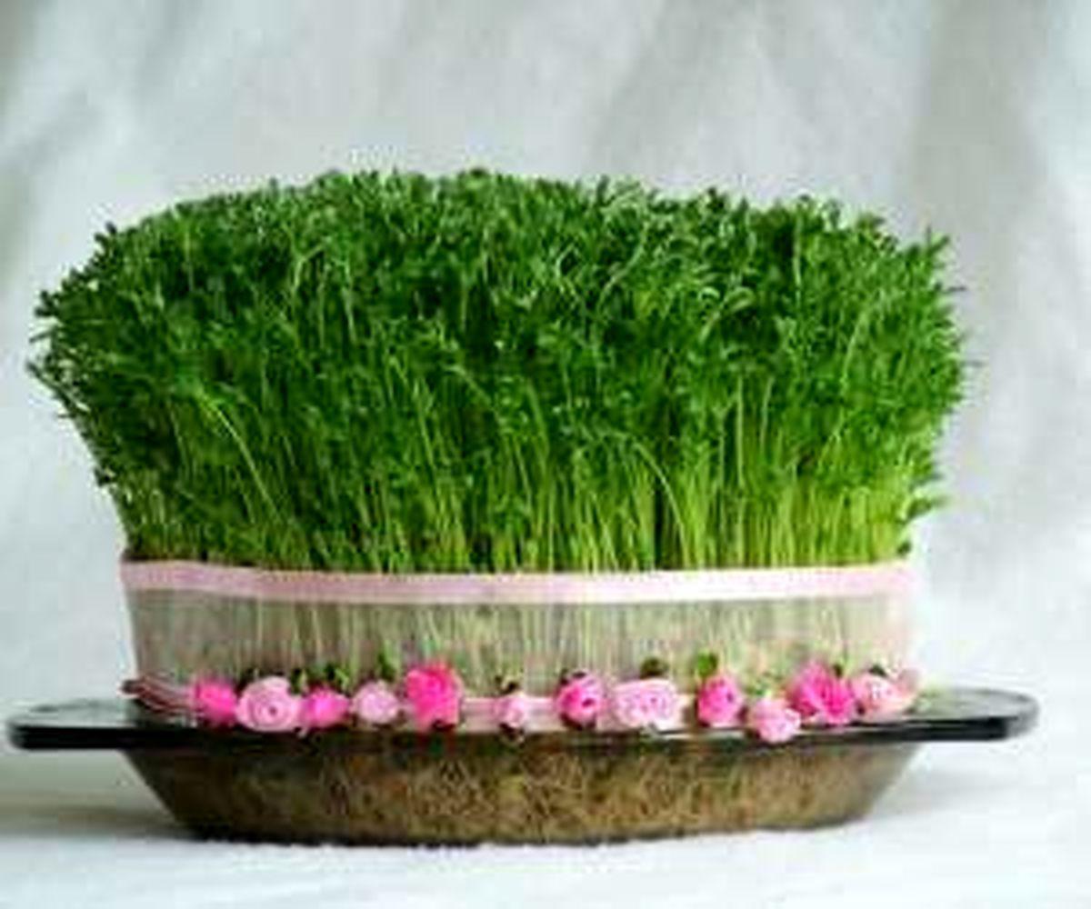 با این روش ها سبزه سفره هفت سین را سبز کنید