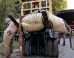 تمساح کودک 8 ساله را زنده زنده خورد + عکس +16