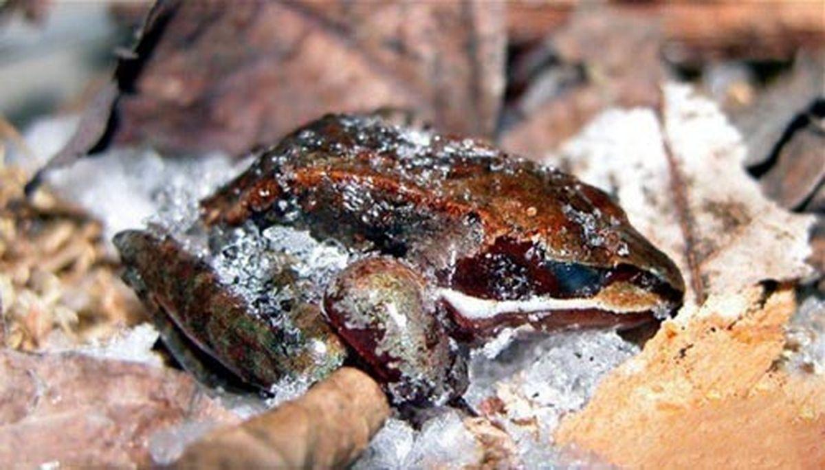 زنده ماندن عجیب این حیوان زیبا در دمای زیر صفر