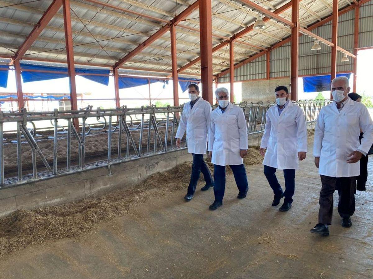 افزایش ۲۰ درصدی تولید شیرخام در کشت و صنعت سلماس