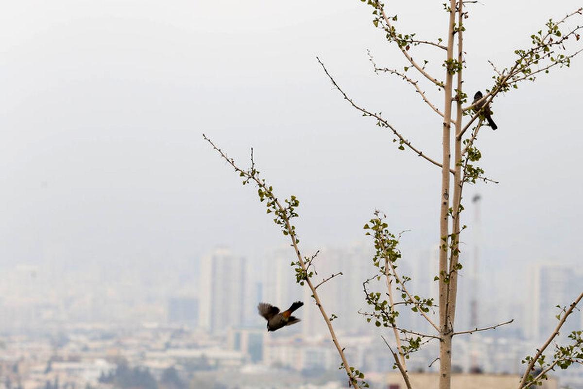 با تعطیلی مدارس و دانشگاه ها آلودگی از بین نرفت