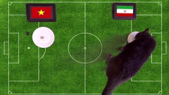 گربه پیشگوی نتیجه بازی ایران و ویتنام  را پیش بینی کرد+عکس