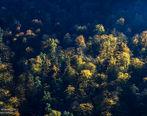 پاییز در جنگل