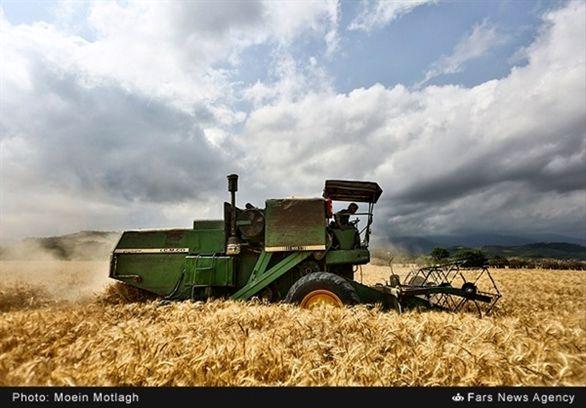 خرید تضمینی بیش از 7 میلیون تن گندم در شعب بانک کشاورزی تا نیمه مردادماه