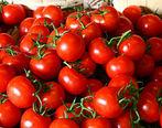 قیمت گوجه فرنگی ارزان میشود