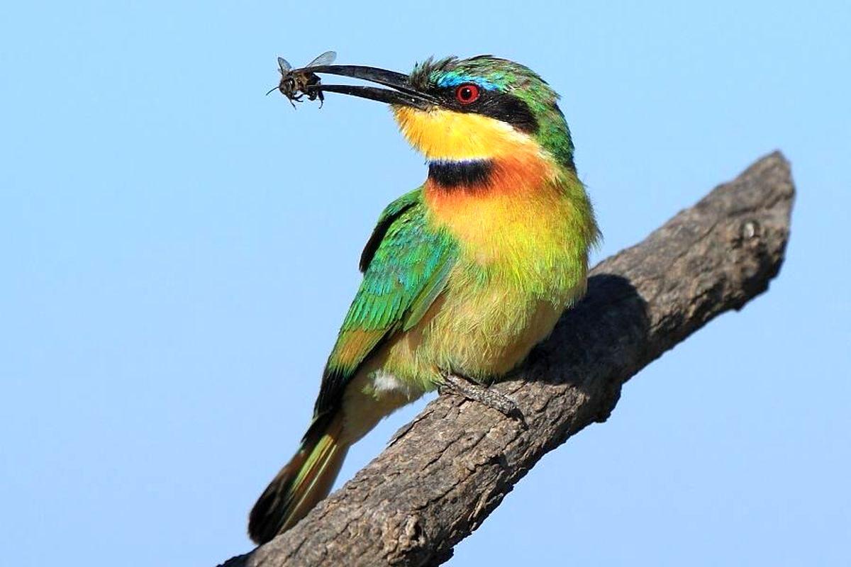 قتل عام ۵۰۰ پرنده بهخاطر یک مشت عسل