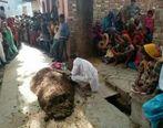 ماجرای باورنکردنی مردی که زنش را زیر کود گاوی دفن کرد