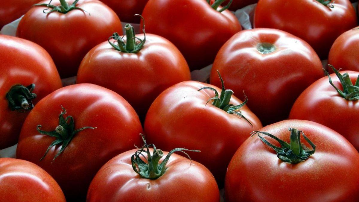 قیمت گوجه کاهش یافت