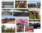 بانک کشاورزی، حامی تولید و کارآفرینان