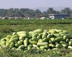 برای شب یلدا چه هندوانهای بخریم؟