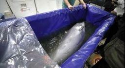 انتقال تنها دلفین برج میلاد تهران به کیش
